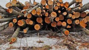 Felled trees, slider stock video footage