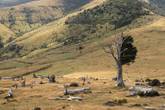 Felled trees on slopes in Banks Peninsula Royalty Free Stock Photo