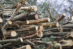 Felled trees. And stacked in a pile Royalty Free Stock Photography