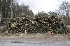 Felled trees. And stacked in a pile Stock Photos