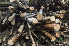 Felled trees. And stacked in a pile Stock Images