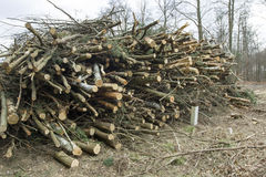 Felled trees. And stacked in a pile Royalty Free Stock Photo