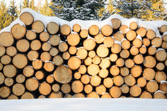 Felled trees stacked, ready transportation to the sawmill Stock Photos
