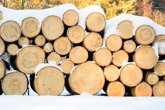 Felled trees stacked, ready transportation to the sawmill Stock Images