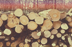 Felled trees in the style of instagram.  Stock Photos