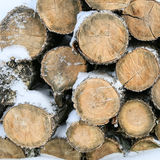 Felled trunks of trees. Circular saw cut Stock Images