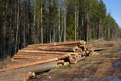Felling and cutting of forests. Stock Images