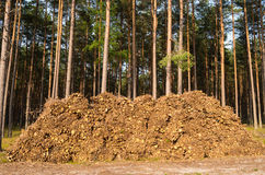 Felling da floresta Fotografia de Stock
