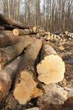 Felling de madeira fotos de stock royalty free