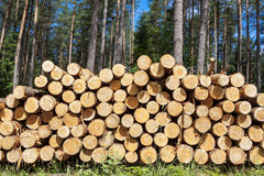 Felling of the forest, wood for fireplaces. Stock Photography