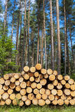 Felling of the forest, wood for fireplaces. Stock Photos