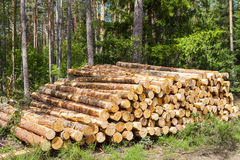 Felling of the forest, wood for fireplaces. Royalty Free Stock Photo