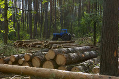 Felling of the Forest Stock Photos