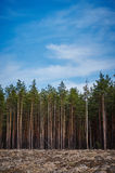 Felling of the forrest Royalty Free Stock Image