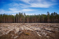 Felling of the forrest Stock Photos
