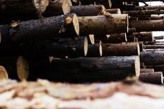 Felling ilegal das árvores no conceito da ecologia da floresta Imagens de Stock Royalty Free