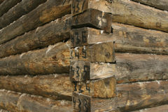 Felling of timber Royalty Free Stock Image