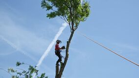 Felling the top of a tree
