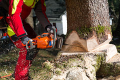 Felling the tree Stock Photography