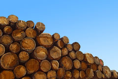 Felling trees. Group of felling trunks on blue sky royalty free stock image