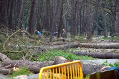 Felling of trees in navia spain royalty free stock images
