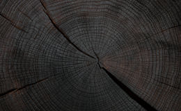 Felling trees with cracks Stock Photo