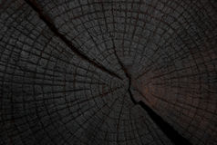 Felling trees with cracks Royalty Free Stock Photo