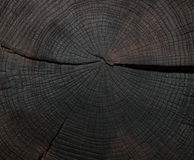 Felling trees with cracks Royalty Free Stock Image