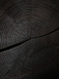 Felling trees with cracks Royalty Free Stock Photography