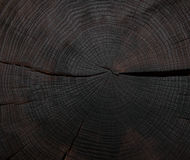 Felling trees with cracks Stock Image
