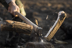 Felling of trees Stock Image