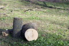Felling of trees Stock Photography