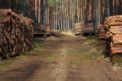 Felling of trees. Royalty Free Stock Photos