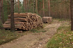 Felling of trees. Stock Photography