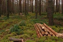 Felling of trees. Stock Photos
