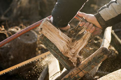 Felling of trees Royalty Free Stock Photo
