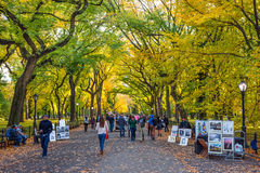 Fall in the Park Royalty Free Stock Image
