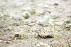 Felsen auf dem Boden Lizenzfreie Stockfotos