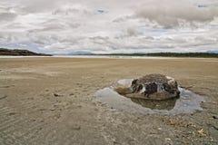 Felsen auf dem Strand Lizenzfreies Stockbild