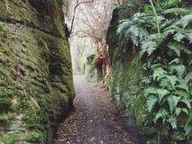 Felsen auf einem Naturweg Stockbild