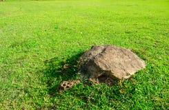 Felsen auf Grün Lizenzfreie Stockfotografie