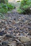 Felsen auf trockenem Fluss in Thailand Stockfotografie