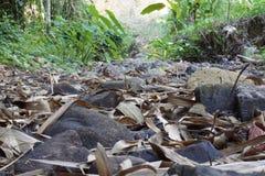 Felsen auf trockenem Fluss in Thailand Lizenzfreie Stockbilder
