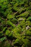 Felsen bedeckt im Moos Stockbilder