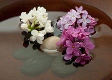 Felsen, Blumen und Wasser Stockfotografie