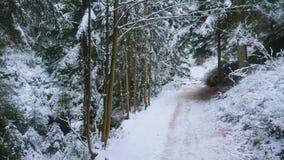 Felsen in der berühmten felsigen Stadt von Adrspach-Teplice schaukelt Winter Lizenzfreies Stockbild