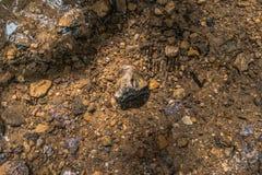 Felsen, der in Flusswasser legt lizenzfreies stockbild