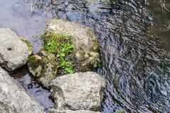 Felsen in einem Strom Stockbild