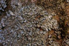 Felsen, Flechte und Moosbeschaffenheit und -hintergrund Moosiger Steinhintergrund Abstrakte Beschaffenheit und Hintergrund für De Lizenzfreies Stockfoto