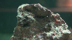 Felsen, Flusssteine, Geologie, Sediment, Natur stock footage